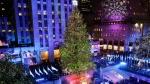 Christmas Tree DNA
