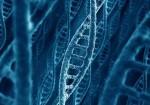 DNA Strands2