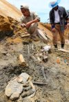 DNA-analysis-identifies-human-remains-in-the-Battle-of-Okinawa